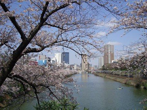 桜 - 市ヶ谷